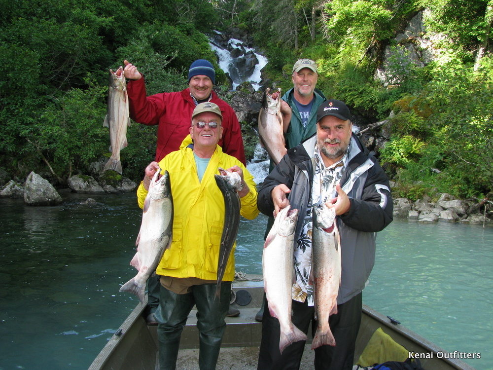 King salmon silver salmon rainbow trout flyout and bear for Kenai river fish counts